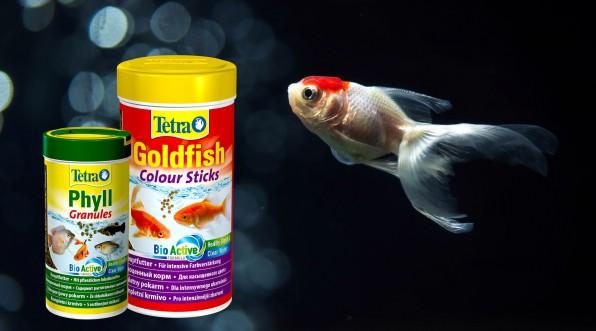 Как, чем и сколько кормить золотых рыбок?