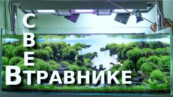 Свет в аквариумном травнике