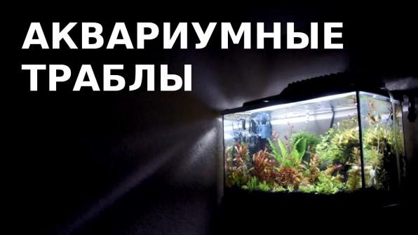 Проблемы после запуска аквариума и пути их решения: муть, слизь, налет.