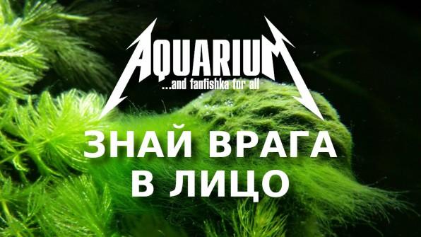 Водоросли в аквариуме видео-обзор