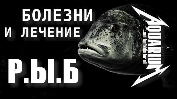 =Симптомы заболевания рыб=