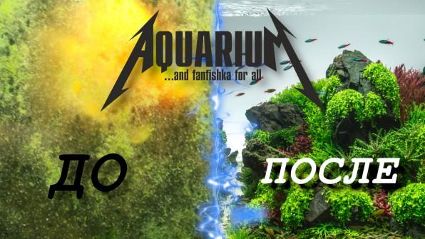 Зеленый налет в аквариуме видео-обзор