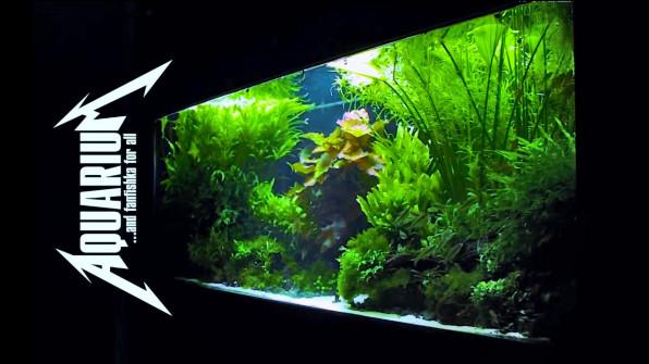 Не растут аквариумные растения