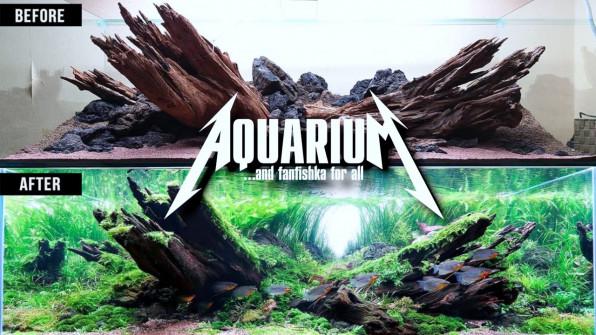 Оформление аквариума: примеры ТОПовых хардскейпов