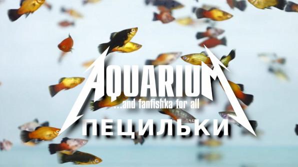 Рыбки пецилии в аквариуме