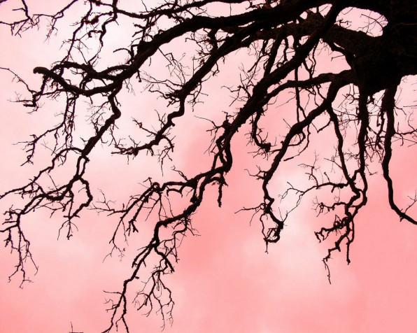 Фрактальность дерева