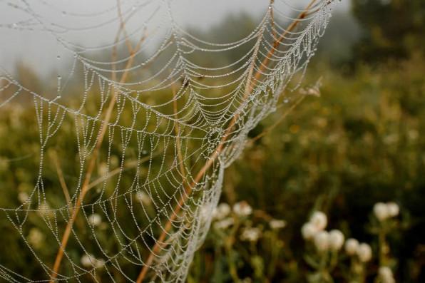 Фрактальность паутины