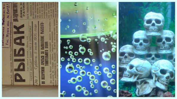 Вопросы аквариумистов: шопинг, чтиво, аэрация