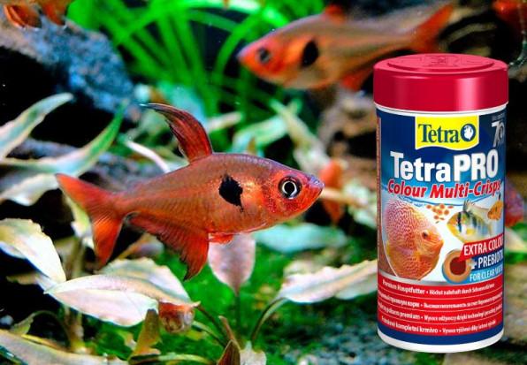ТОП аквариумных рыбок для травника