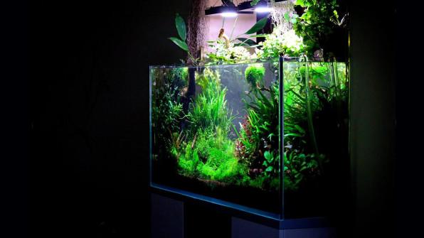 Редфилд рулит: подача удобрений в аквариум с растениями
