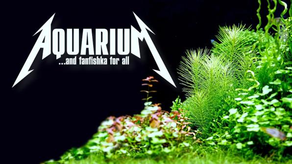 Пропорция Редфилда в растительном аквариуме видео-обзор
