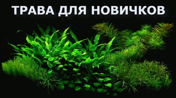 ТОП аквариумных растений для новичков видео-обзор