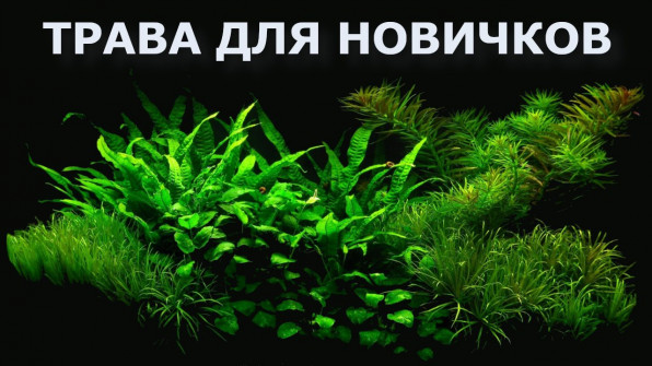 ТОП аквариумных растений для новичков