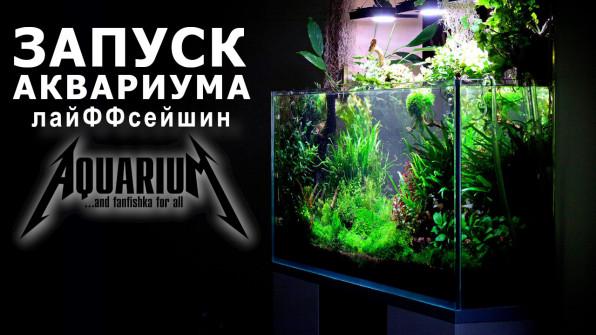 Запуск аквариума лайФФсейшин