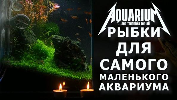 Самые маленькие аквариумные рыбки