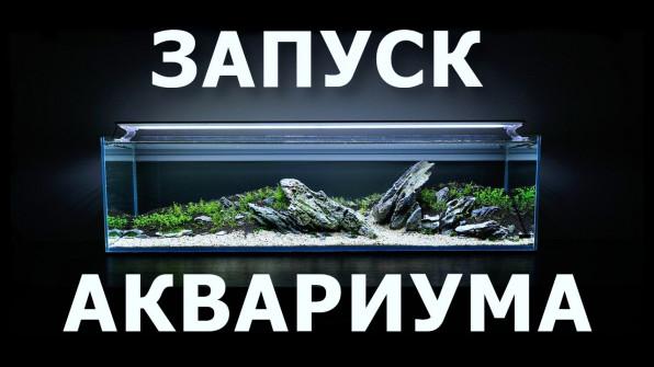 Запуск аквариума все варианты видео-сейшин